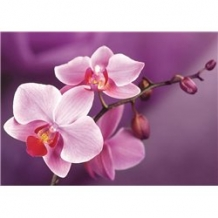 Diamond Painting Orchidee op tak