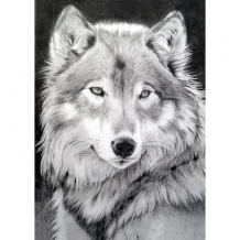 Diamond Painting Grijze Wolf
