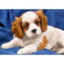 Diamond Painting Spaniel puppy
